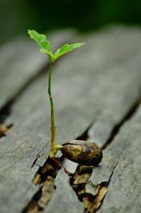 Jeune pousse entre planches de bois